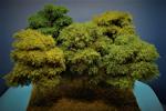 Laub Bäume, Type 2