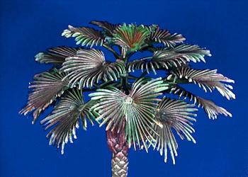 Gras, Sträucher, Palmen, Bäume,