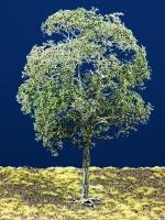 Diorama Zubehör Modell Bäume, 1 Buche mit Sommerlaub, ca. 25 cm,