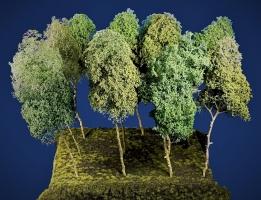 Baumgruppe aus 9 Laubbäume, ca. 20 - 30 cm,