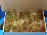 Diorama Zubehör, Seemoos, Meerschaum für Diorama Bäume u. Geländebau