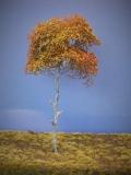 Diorama Zubehör Modell Bäume, 1 Baum im Herbst, 250 mm
