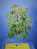 Diorama Zubehör Modell Bäume, 1 Buche mit Sommerlaub, ca. 35 cm,