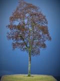 Diorama Zubehör Modell Bäume, 1 Buche ohne Laub, ca. 25 cm,