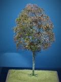 Diorama Zubehör Modell Bäume, 1 Buche mit Herbst- Laub, ca. 25 cm,