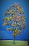 Diorama Zubehör Modell Bäume, 1 Buche mit Herbst- Laub, ca. 35 cm,