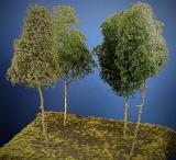 Baumgruppe aus 4 Laubbäumen, 25 - 30 cm