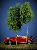 Baumgruppe aus 2 Laubbäumen, 25 - 30 cm