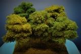 Diorama Modell Bäume Typ 2, 5 Buchen mit Sommerlaub, ca. 25 - 35 cm