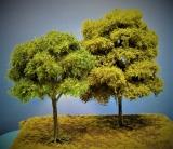 Diorama Modell Bäume Typ 2, 2 Buchen mit Sommerlaub, ca. 25 - 30 cm