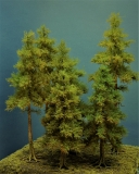 Diorama Modell Nadelbäume, 7 Fichten, ca. 40-35-32-26-18-18-14 cm