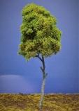 Diorama Modell Bäume Typ 2, 1 Buche mit Sommerlaub, ca. 30 cm