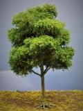 Diorama Modell Bäume Typ 2, 1 Buche mit Sommerlaub, ca. 35 - 38 cm
