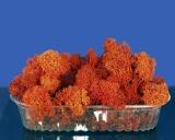 Diorama Zubehör Islandmoos rot orange u. präpariert, ca. 75g
