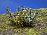 Diorama Zubehör, 1 Pflanzen Set 10, ca. 6 cm hoch