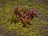 Diorama Zubehör, 1 Pflanzen Set 19, ca. 2 cm hoch