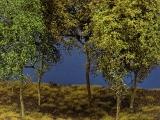 Baumgruppe aus 5 Laubbäumen, 15 - 20 cm